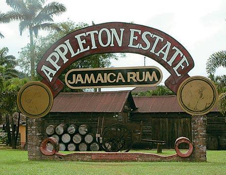 zdanie Jamaika rum