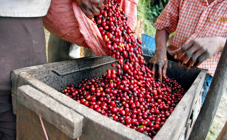 zerna coffee ssypaut v korob