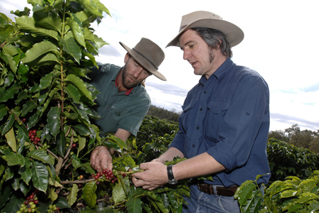 DAFF Images.  AAA project. Australian Coffee plantation near Dimbulah Nth QLD. Farm manager Paul Paterson and DPI extention officer Mathew Weinert looking at coffee. . Arthur Mostead Photographer. 13,14,15/06/07.