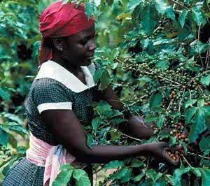 Kenya_Coffee women