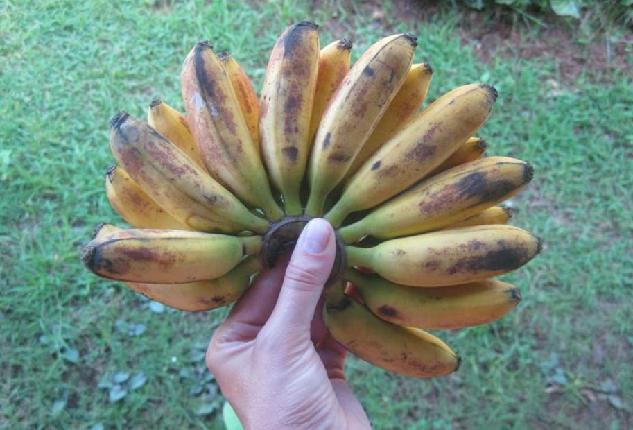 small_bananas