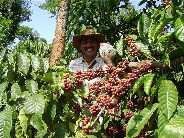 coffee-farmer india